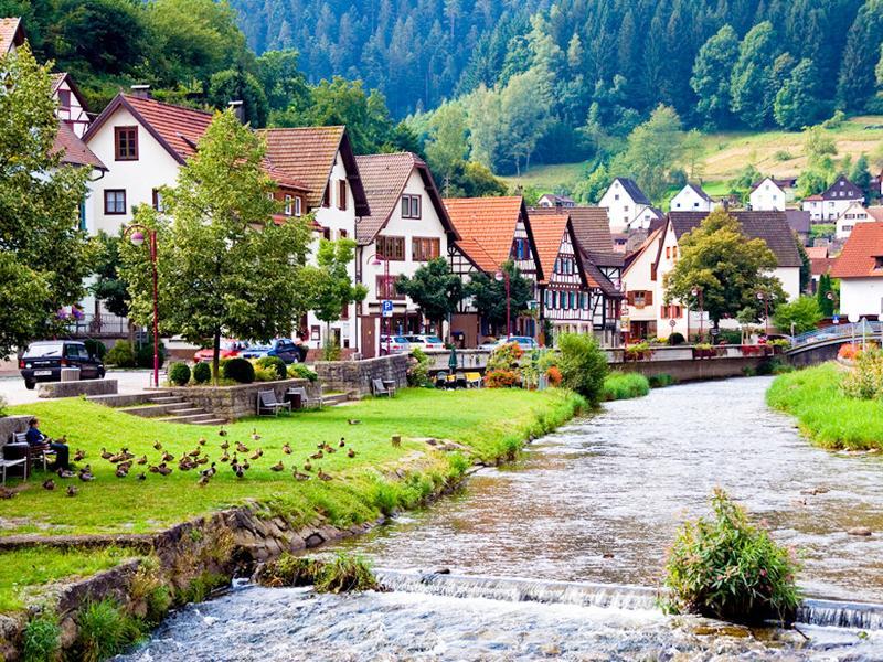 Selva Negra y Crucero por el Rhin