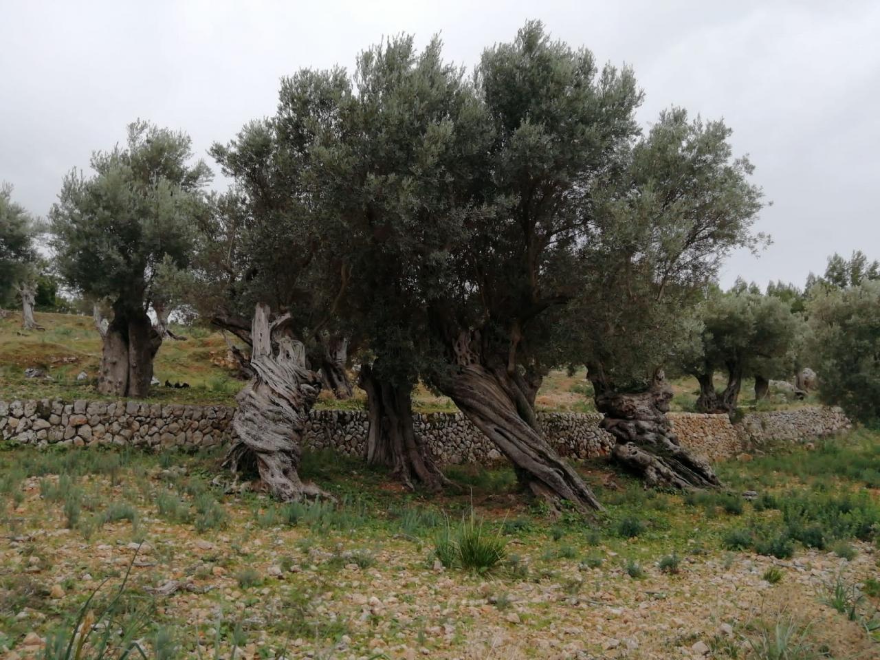 Concurso para nuestros suscriptores: D'oliveres i olives