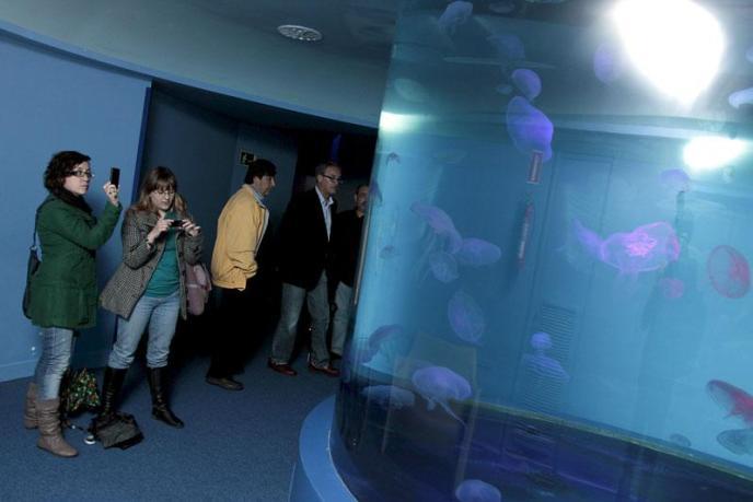 El Gran Azul de Palma Aquarium